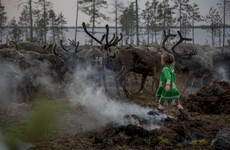 'It's a painful life, but the most beautiful there is': A reindeer herd's journey to their winter home