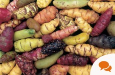 Rediscover your roots: 'Exotic oca thrives in Irish gardens'
