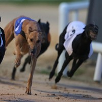 Theft of €1 million racing dog 'is Shergar story of greyhound industry'