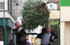 Ireland gets its first ever Christmas Tree Throwing Championship