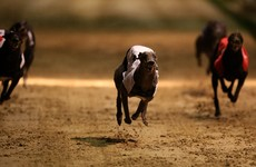 Four men arrested for greyhound theft released without charge