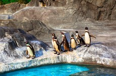 Investigation launched after seven penguins drown in Canadian zoo