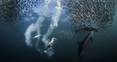 The winner of the 2016 Nat Geo photography competition