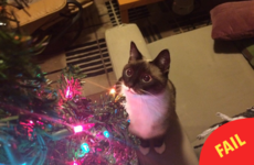 8 photos that sum up the struggle of owning a cat at Christmas