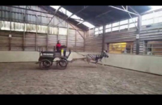 Anger after horse dealer posts pictures of zebra in Laois stables