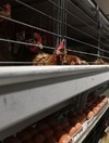 Farmers urged to check flocks after outbreak of bird flu in England