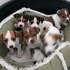 Thirteen puppies destined for UK market seized at Dublin Port