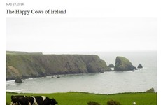 Irish people are loving this American blogger's post marveling at the 'happy cows of Ireland'