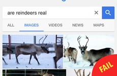 8 people who just found out that reindeer are real animals