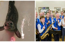 Thumper the seal, brass band coats and wheels for Liv - here's what happens to those Tesco blue tokens