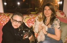 Carrie Fisher is in intensive care with her dog by her side after a heart attack on a flight