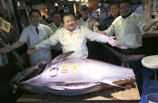 A businessman in Japan has paid over €600,000 for a single fish