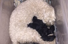 A teenager had a very amusing reaction to her dog having black puppies