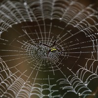 Super-strong man-made spider silk could soon be used to repair spinal cords