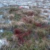 Dog walkers asked to stop using Wicklow Mountains after sheep killed