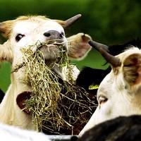 Case of BSE found in Irish cow - but 'no public health risks'