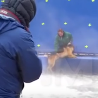 A Dog's Purpose filmmakers accused of animal cruelty after video footage shows dog being forced into water