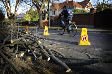 Downed trees await collection after storms in Dublin