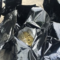 Largest cannabis haul in State's history linked to convicted Irish trafficker