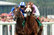 Sans Frontieres out of Melbourne Cup