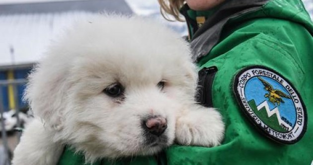Three white sheepdog puppies found in Italian avalanche boost hope for survivors