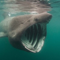 A complete list of the sharks in Irish waters has just been published