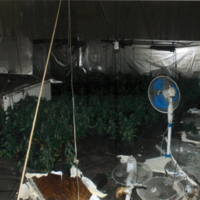 Gardaí discovered 350 cannabis plants after they were called to a house fire