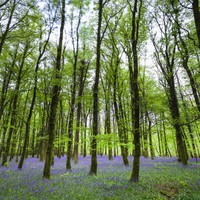 Europe is lending Ireland €90 million to grow thousands of trees