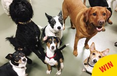 9 Irish doggie daycares to follow that will brighten up your Facebook feed