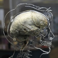 Brain power begins to decline from age 45 - study