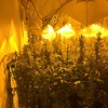 Man charged after Gardaí raid cannabis growhouses worth €450,000 in Galway