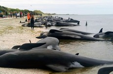 New Zealand beached whale crisis 'over' say rescuers