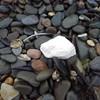 Warning as 'oily fatbergs' turn up on Irish beaches
