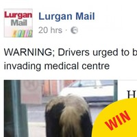 People had so many puns after four horses 'invaded' a doctor's office in Armagh yesterday