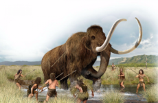 We might get to welcome the mammoth back to Earth in a few years time...