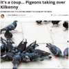 Pigeons are taking over Kilkenny and the locals are not at all happy about it