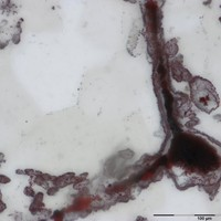 Fossils point to life on Earth four billion years ago