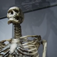 Irish giant's bones will stay at London museum - but he wanted to be buried at sea