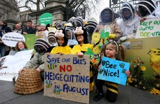 Hive of activity outside Dáil as beekeepers protest against new laws