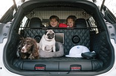 Paws everything! Nissan has created the ultimate car for dog lovers