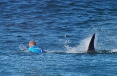 Three-time world surf champion to return to water two years after shark attack