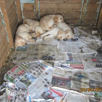 Puppies found covered in urine and faeces with no access to food or water