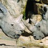 Over 100 animals die in Dublin Zoo in two years (including some critically endangered ones)