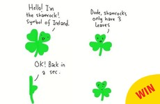 An Irish artist has issued a timely reminder on the difference between shamrocks and four-leaf clovers