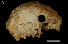 A half-skull that is 400,000 years old was found on last day of excavation project