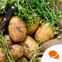 'Irish people put their spuds in the ground around St Paddy's Day, believing it to be an auspicious day'