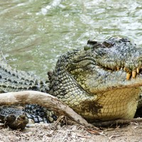 Australian teen who jumped into river for dare escapes crocodile attack by punching it in the head