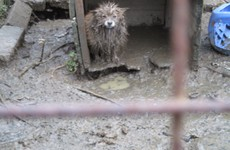 'Hungry, thirsty, filthy': Woman fined €2,500 after dogs discovered in horrendous conditions