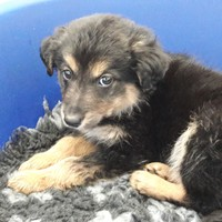 Gardaí seized more puppies at Dublin Port last night