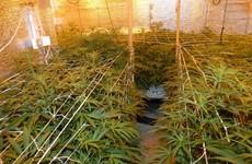 Gardaí seize cannabis plants worth €200,000 in Mayo